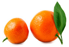 Two ripe tangerines isolated on white background Royalty Free Stock Photo