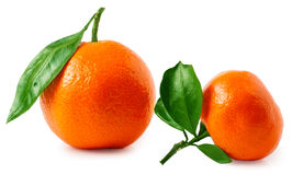 Two ripe tangerines isolated on white background Stock Photos