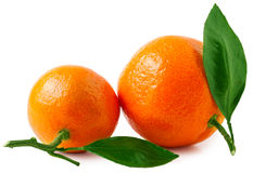 Two ripe tangerines isolated on white background Royalty Free Stock Photos