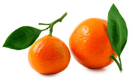 Two ripe tangerines isolated on white background Royalty Free Stock Image