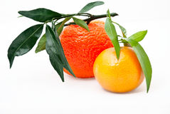 Two ripe tangerines with leaves Royalty Free Stock Photography