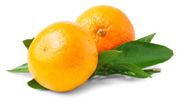 Two ripe tangerines with leaves Stock Photos