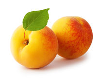 Two ripe yellow apricot with leaves Royalty Free Stock Photo