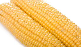 Two ripe yellow corn cob. On white background Stock Photography