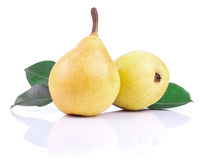Two ripe yellow pears with leaves  Stock Photography
