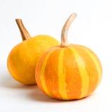 Two ripe yellow pumpkin Closeup Stock Images