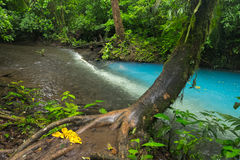 Two rivers in Costa Rica. Two clear rivers with different acidity mix and create the river with turquoise water. Rio Celeste, Costa Rica Royalty Free Stock Images