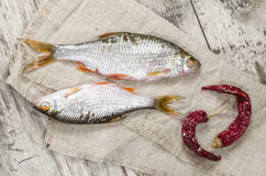 Two roaches fish on a linen napkin. Royalty Free Stock Images