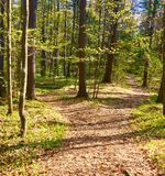 Two Roads Diverged In A Wood And I Took Stock Photos