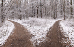 Two roads. In the forest covered with the first snow Stock Photos