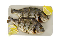 Two roasted denis fishes on plate. Two roasted denis( sea bream) fishes with lemon  on square ceramic plate isolated on white Royalty Free Stock Images