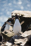 Two rockhopper penguins. On the rock stock photo