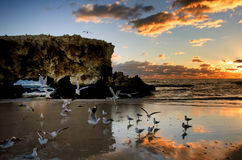 Two Rocks Sunset beach. Sunset Beach Perth WA with gulls flying and landing on the shore Stock Photo