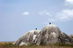 Two Rocks in the wilderness of the Serengeti. 2 rocks in the wilderness of the Serengati park in Tanzania, Africa Royalty Free Stock Image