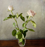 Two romantic pink roses on grunge texture Stock Photo