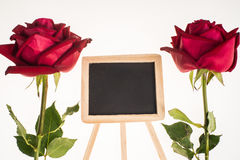 Two romantic red rose border and blackboard white background. Two romantic red rose and blackboard, symbolic for love, on white background a gift for loved one Stock Photography