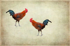 Two roosters on grunge background Royalty Free Stock Images