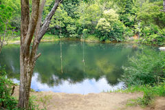 Two rope swings over a beautiful pond. Royalty Free Stock Photo
