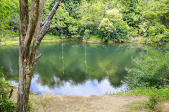 Two rope swings tied to a tree over looking a beautiful pond. Royalty Free Stock Photos
