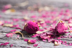 Two rose buds and petals on wooden background. Two rose buds and petals on old wooden table stock photography