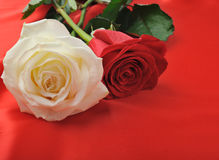 Two rose on satin Stock Image