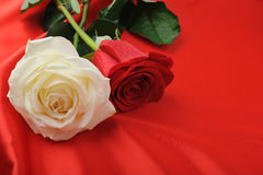 Two rose on satin Royalty Free Stock Image