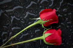 Two roses. In raindrops romantic love concept Royalty Free Stock Image