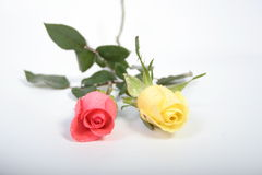 Two roses. Red & yellow roses Royalty Free Stock Photography