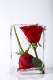 Two roses in ice Royalty Free Stock Photos