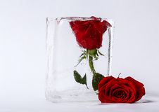 Two roses in ice Stock Photography