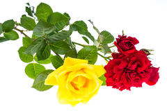 Two roses red and yellow on light background Royalty Free Stock Photography