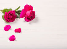 Two roses on white wooden background Stock Images