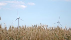 Two rotating windmills in the field of ripening spikelets of wheat. Two rotating wind mills in the field of ripening yellow spikelets of wheat under a clear blue stock video footage