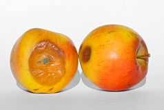 Two rotten apples. One covered with mold Stock Photos
