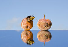 Two rotten apples on mirror Royalty Free Stock Photo