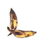 Two rotten cultivated bananas isolated on white Stock Photo