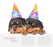 Two Rottweiler puppies in birthday hats peeking from behind empty board and looking at camera. isolated on white background.  Royalty Free Stock Image