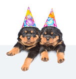 Two Rottweiler puppies in birthday hats peeking from behind empty board and looking at camera.  on white background Royalty Free Stock Image