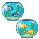 Two round aquariums with golden and blue tropical fish and seaweed.. Two round aquariums with golden and blue tropical fish and seaweed. Underwater world at Stock Images