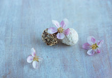 Two round candy and apple flowers Royalty Free Stock Photos