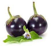 Two round eggplants Stock Image