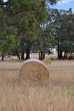 Two round hay bails Royalty Free Stock Images