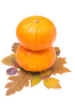 Two round orange pumpkin on autumn leaves isolated Stock Image