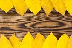 Two row of fallen autumn yellow leaves on old worn rustic brown wooden table. With copy space royalty free stock images