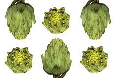 Two rows of artichokes Royalty Free Stock Photography