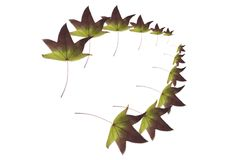 Two rows of autumn leaves Royalty Free Stock Photos