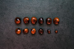 Two rows of chestnuts on the stone background Stock Photos