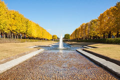 Two rows of golden ginkgo trees under the blue sky. Stock Images