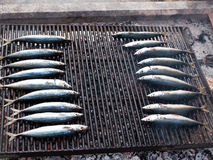 Two rows of mackarel fish on grill Stock Image