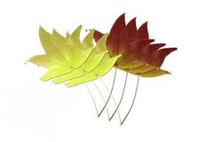 Two rows of maple leaves Stock Image